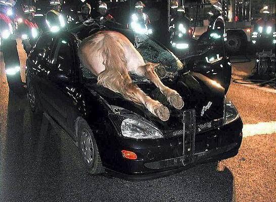 Autounfälle gehabt/gemacht? - Seite 3