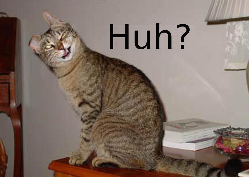 Confused Cat Huh Bild 12369 Kb Honda Forum Tuning